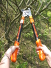 Industrial Duty Telescopic Ratchet Tree Lopper.
